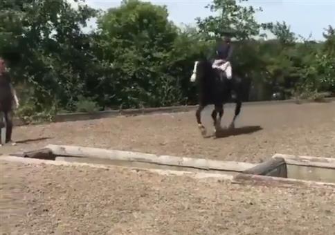 Wie das Pferd das Hindernis meistert