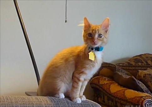 Katzen sind kleine Arschlöcher Compilation