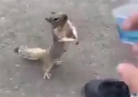 Eichhörnchen hat Durst