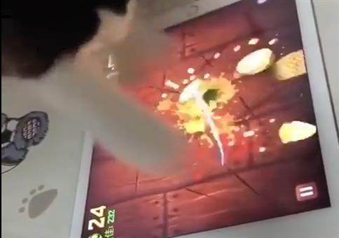 Die Fruit Ninja Katze