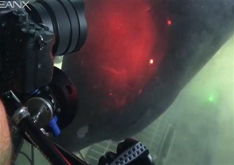 Stumpfnasen-Sechskiemerhai - Monster der Tiefsee
