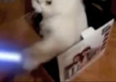 Katze in der Box mit Laserschwert
