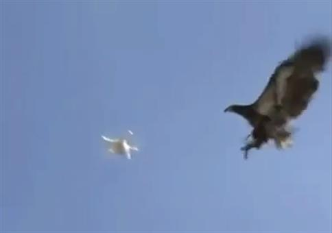 Anti-Drohnen-Vogel