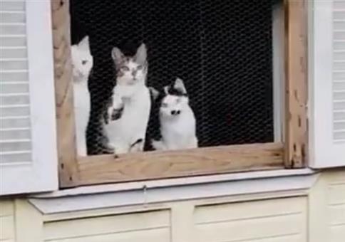Katzen schauen beim Ballspielen zu