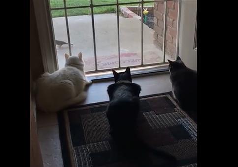 Katzen beobachten Vogel als plötzlich...