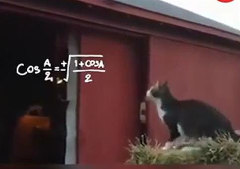 Wenn die Katze ihren Sprung genaustens berechnet