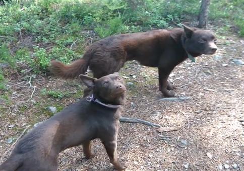 Hunde-Stillleben