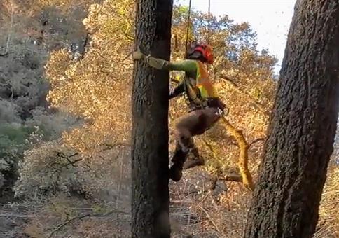 Mal eben den Baum hochsteigen