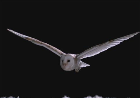 Wie schaffen es Eulen so leise zu fliegen
