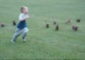 Kleine Hunde verfolgen Jungen