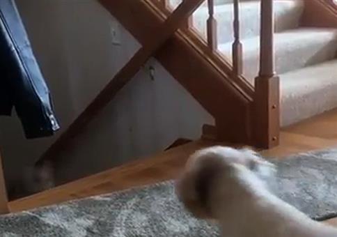 Na, wer kommt dann da die Treppe hoch?