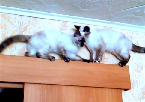Katzen finden immer einen Weg