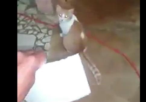 Diese Katze kann lesen!