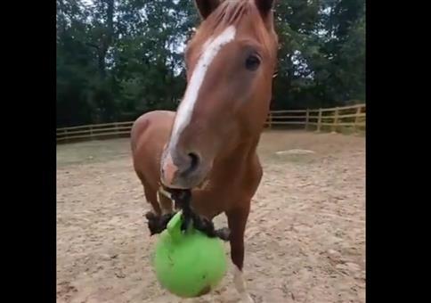 Hey Pferd! Schmeiß mal den Ball rüber!