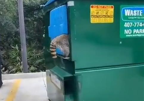 Die Waschbärenbande im Müllcontainer
