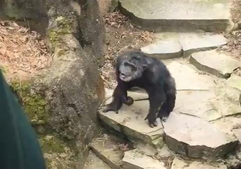 Affe im Zoo begrüßt die Oma