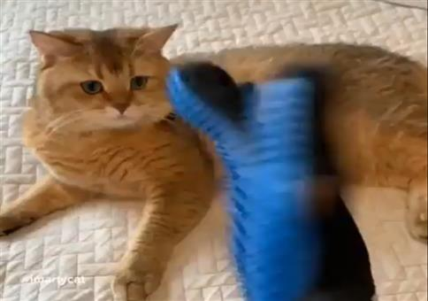 Was man so aus Katzenfell machen kann
