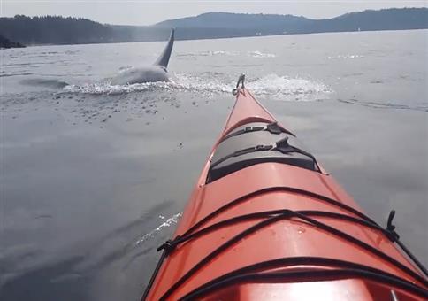 Den Killerwalen so nah