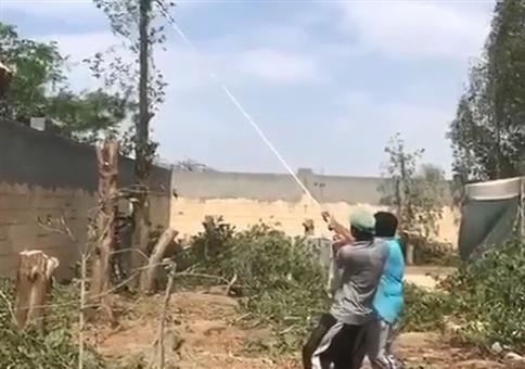 Kräftig am Baum ziehen und dann wegrennen