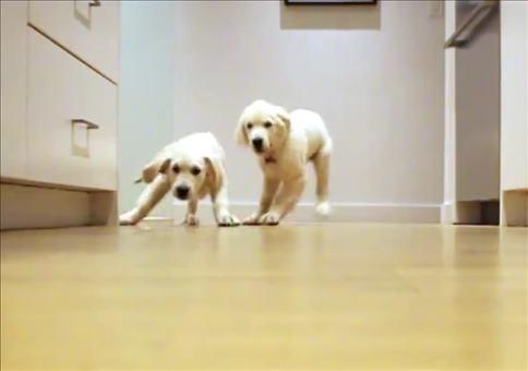 Hunden rennen zu ihrem Futter - Timelapse Style