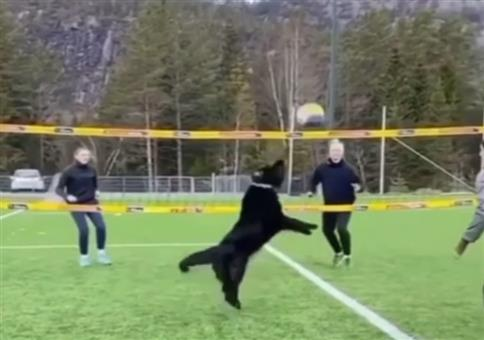 Volleyball Doggy Style