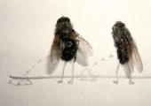 Kunst mit toten Fliegen