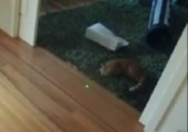 Katzen Laser Bowling