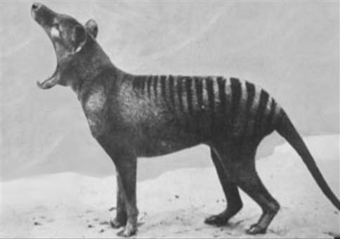 Seltene Aufnahmen von ausgestorbenen Tierarten