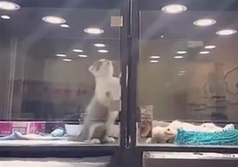 Kleine Katze will ihren Freund besorgen