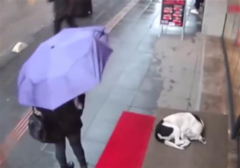 Einem Hund in Not helfen