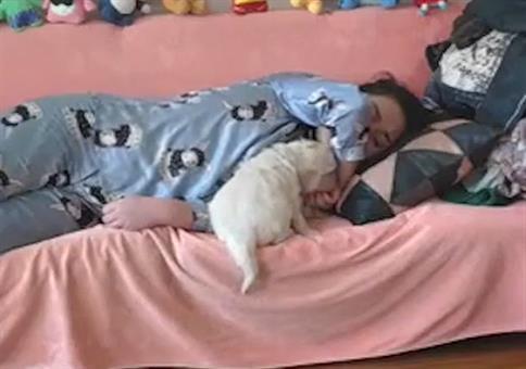 Klare Verhältnisse schaffen: Wer darf bei Herrchen schlafen?