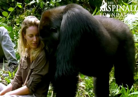 Der Gorilla weiß was gut ist