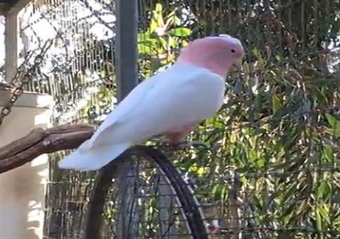 Vogel dreht am Rad
