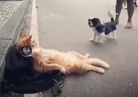 Die coolste Katze im Dorf