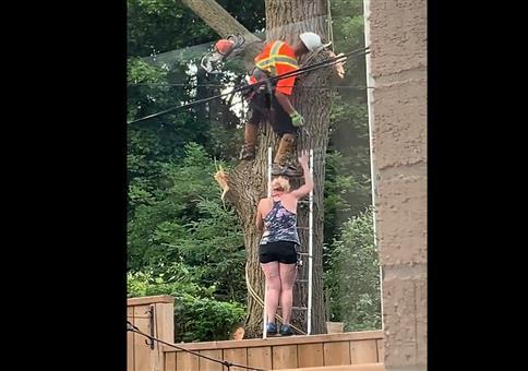 Einmap mit Profis: Baum fällen mit Frau auf Leiter