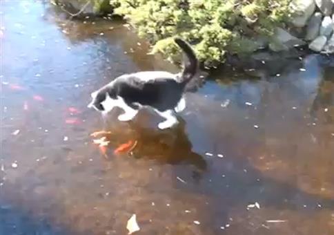 Da hat die Katze im Winter auch was zu tun