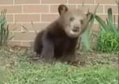 Bär bekommt Niesattacke
