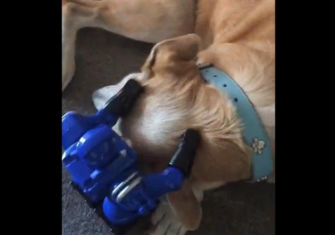 Kleine Roboter massieren Hund