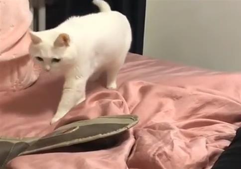 Die Beatbox-Katze