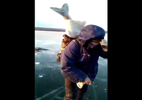 Fisch im Rucksack