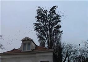 Viele Vögel auf einem Baum