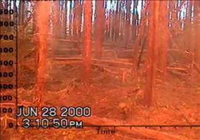 Waldbrand - Mittendrin statt nur dabei