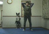 Hund macht Fitnessübungen mit