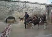 Hunde Massenfütterung
