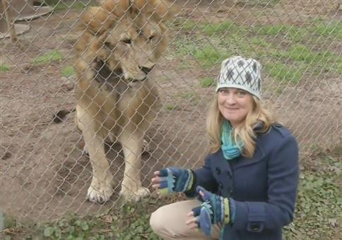 Löwe lässt sich nicht dumm anquatschen