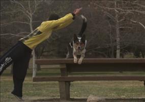 Jumpy & Alex - The Parkour Dog