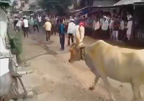 Nur ein Kuhsprung entfernt