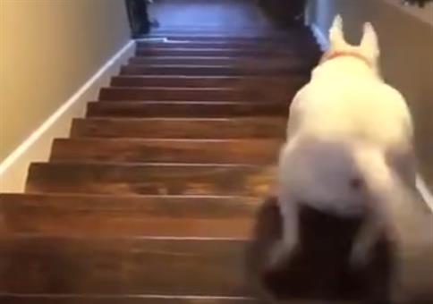Wenn der Hund die Treppe runter muss