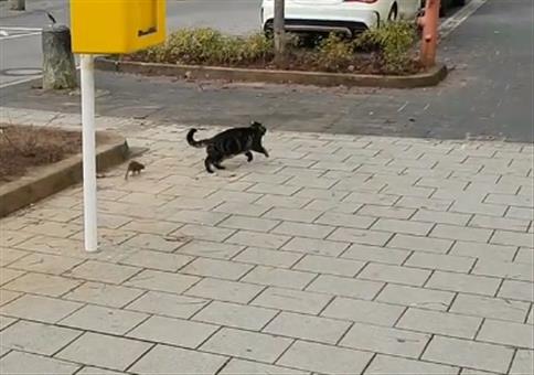 Katze vs Ratte