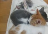 Ein Haufen Kätzchen